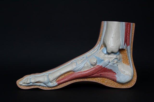 foto de un pie para mostrar donde está el tendón de Aquiles